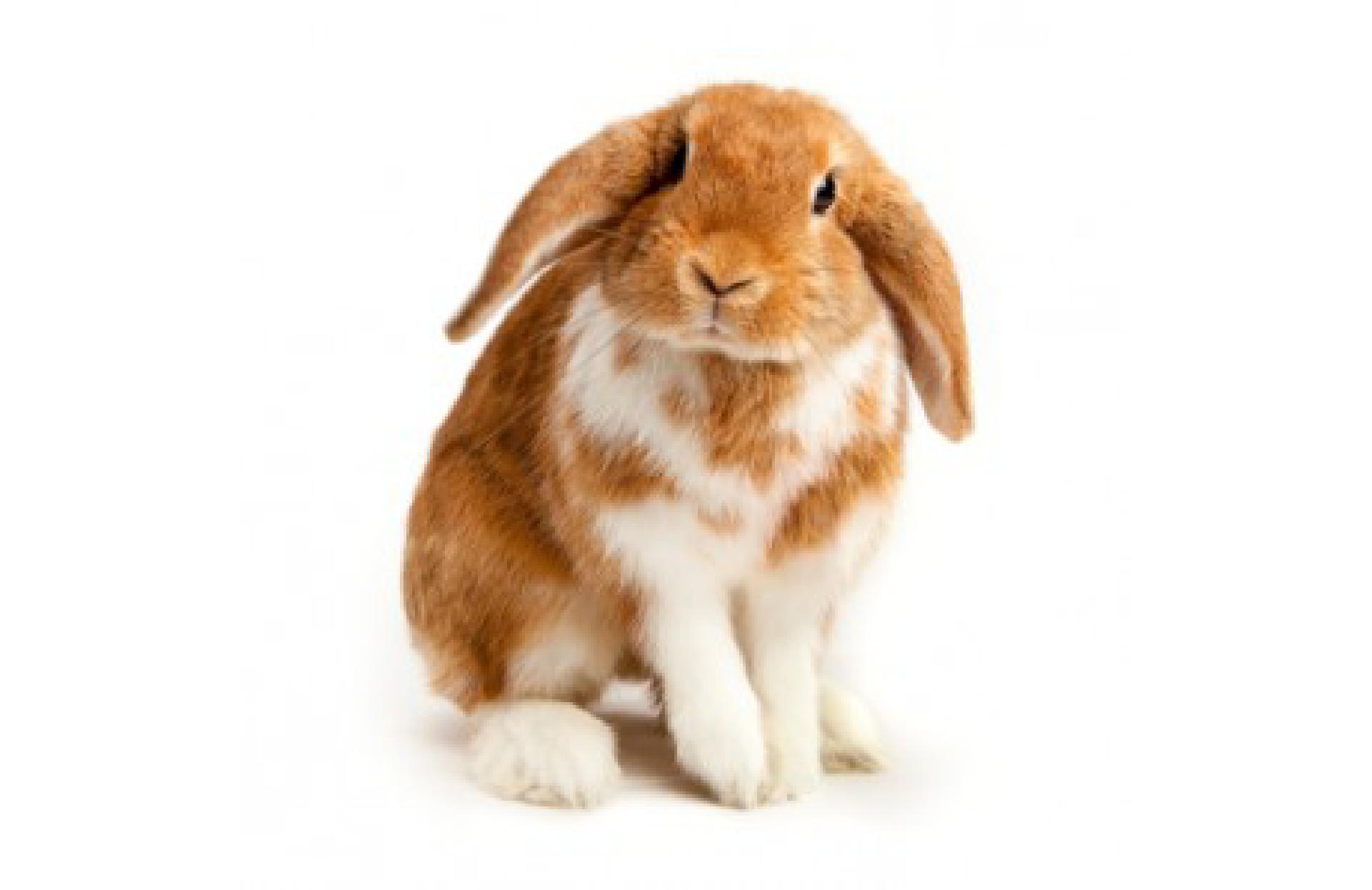 PETCO Nat'l Adoptions March 9 & 10
