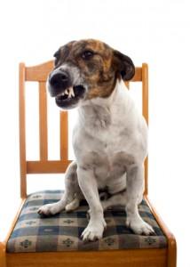 Recipe for an Aggressive Dog