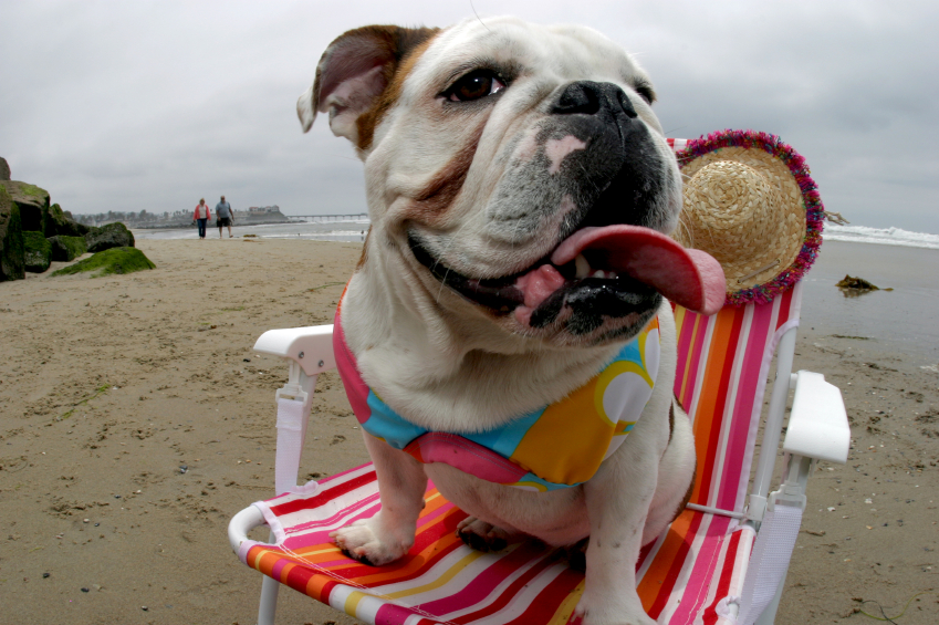 Make Your Dog A STAR – Photos of Dogs at the Beach for Sand N Sea