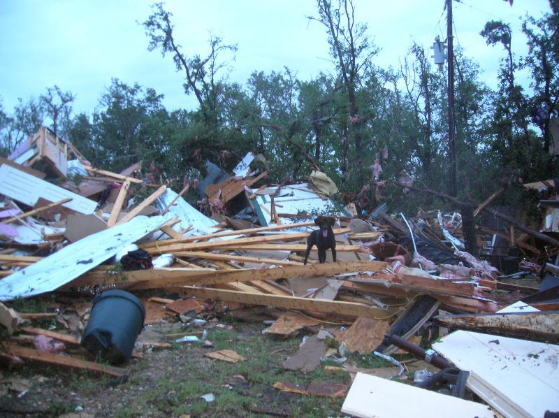 Texas Search Dog Tornado Assistance