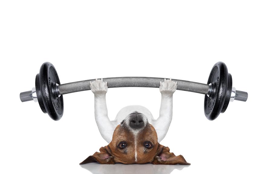 Dog Exercise: Exercising Your Dog Indoors