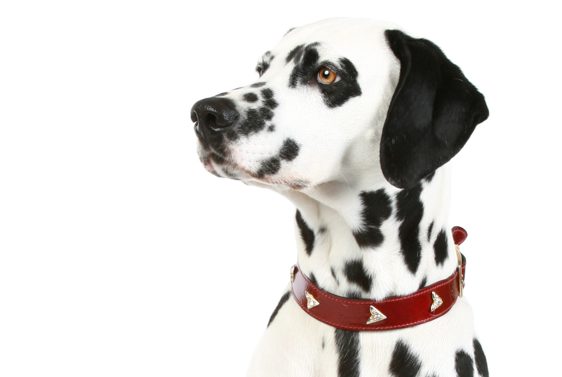 NOW HIRING! Polka Dot Dogs