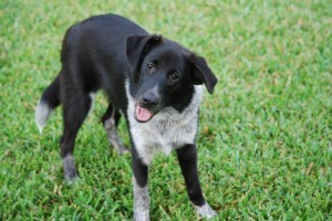 Jax could be your new best friend!