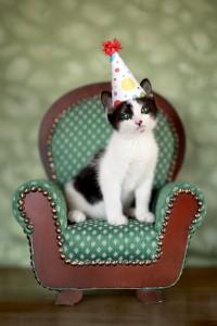 Birthday Kitten Sitting in a Chair