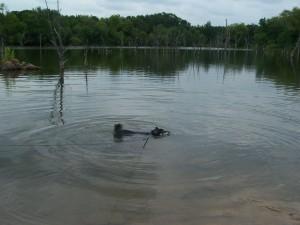 Kuma swims the lake