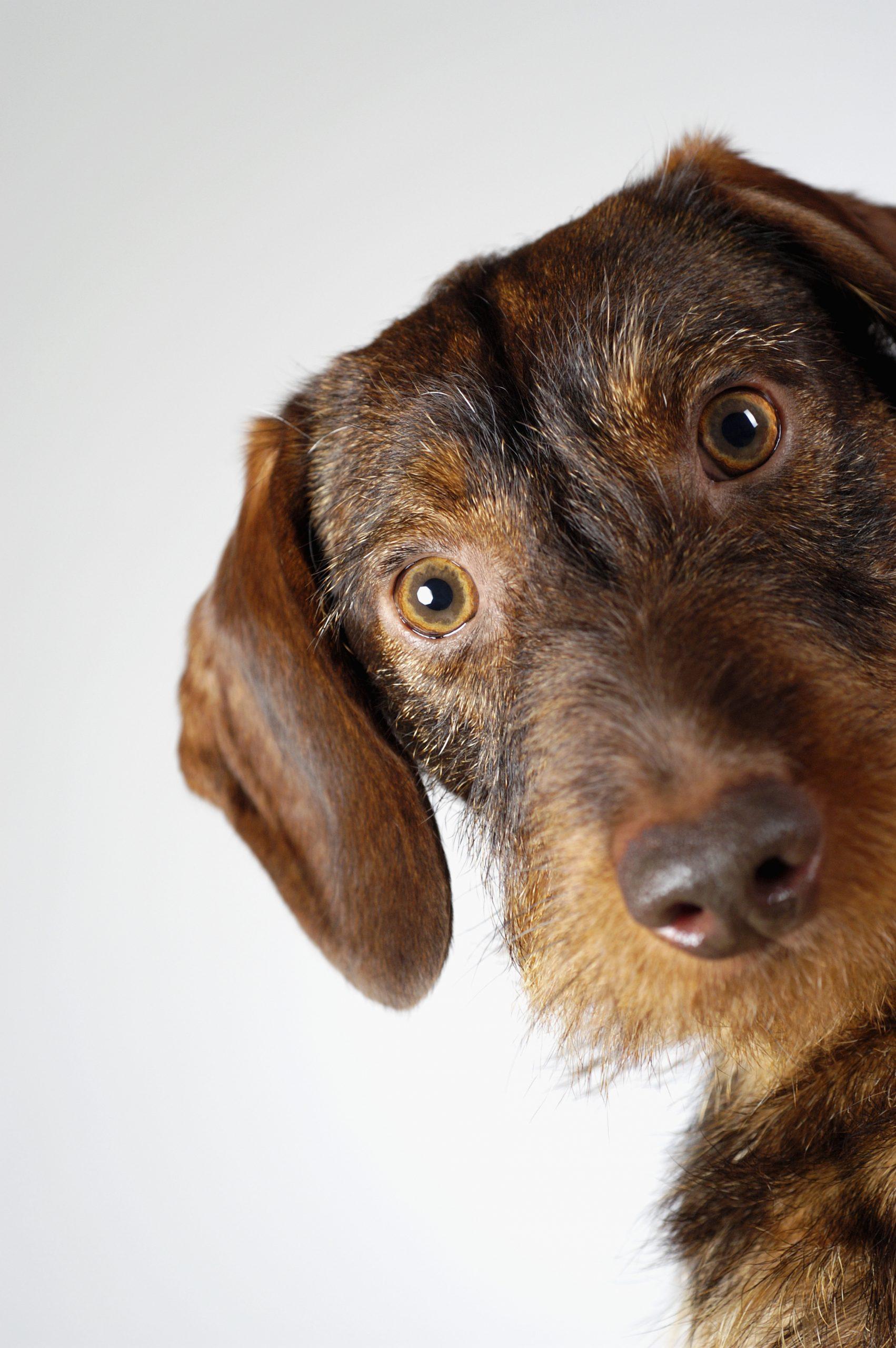Job Opening Houston Pet Care