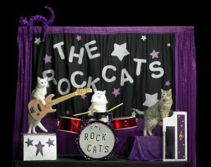 Rock-Cats new