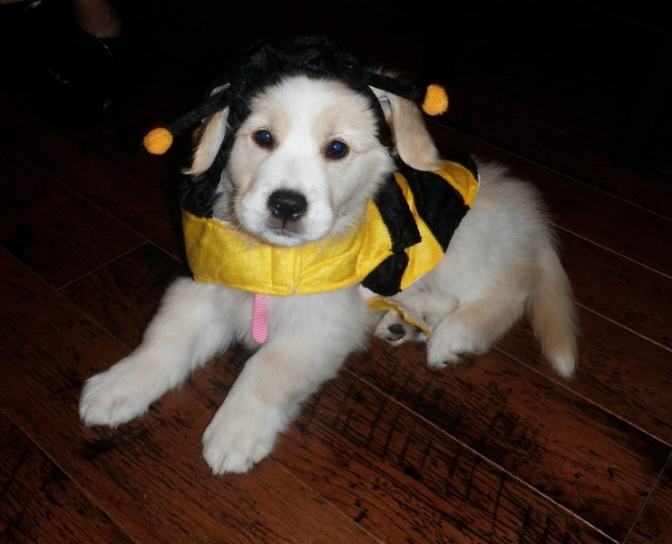 Henrietta's Halloween
