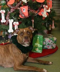 Hazel waits patiently for her present