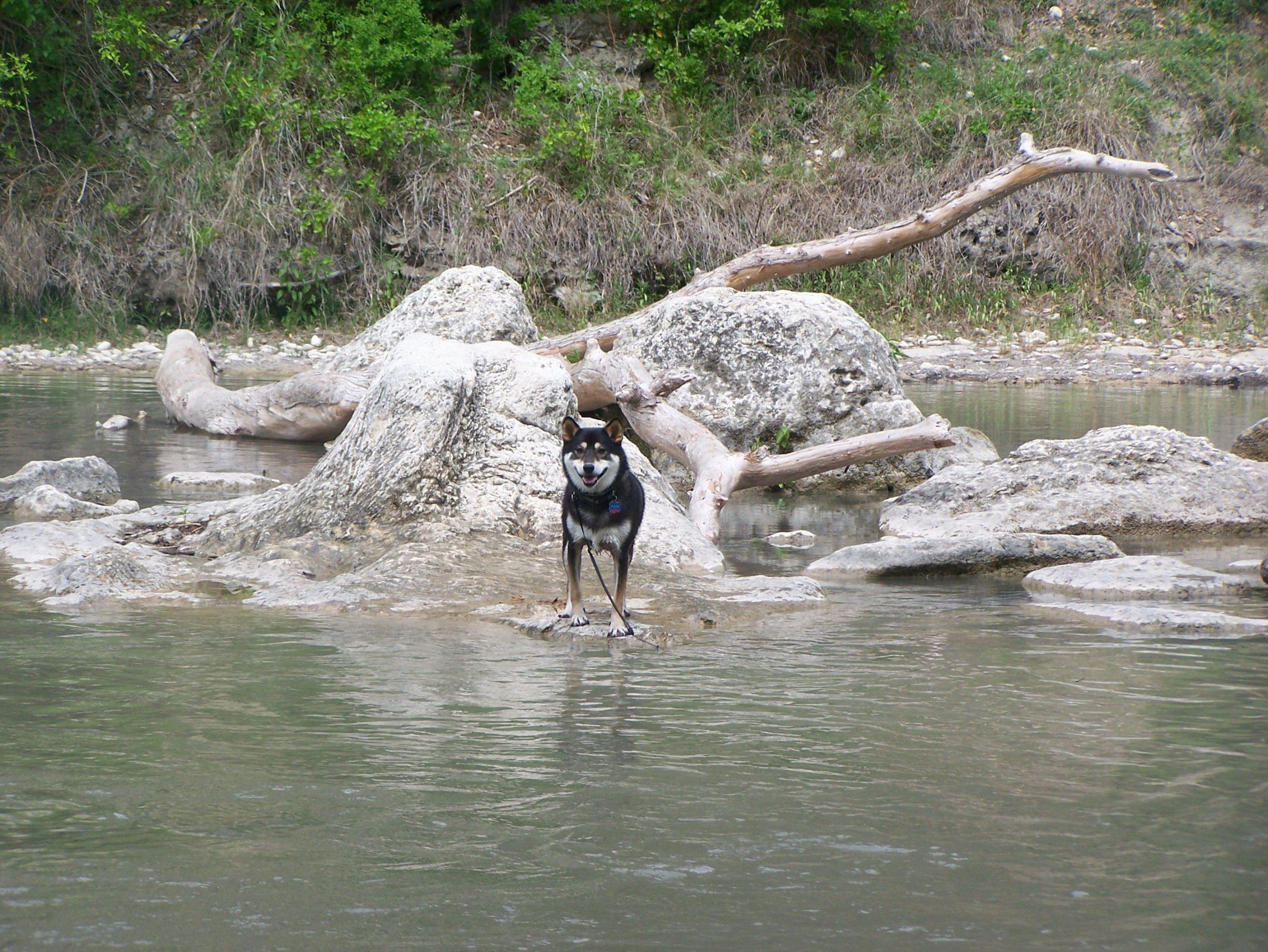 Kuma's Fun Hiking & Park List For Pups