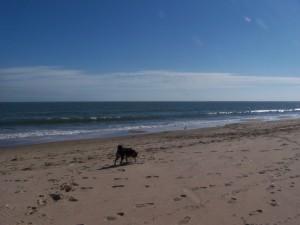 Kuma on beach