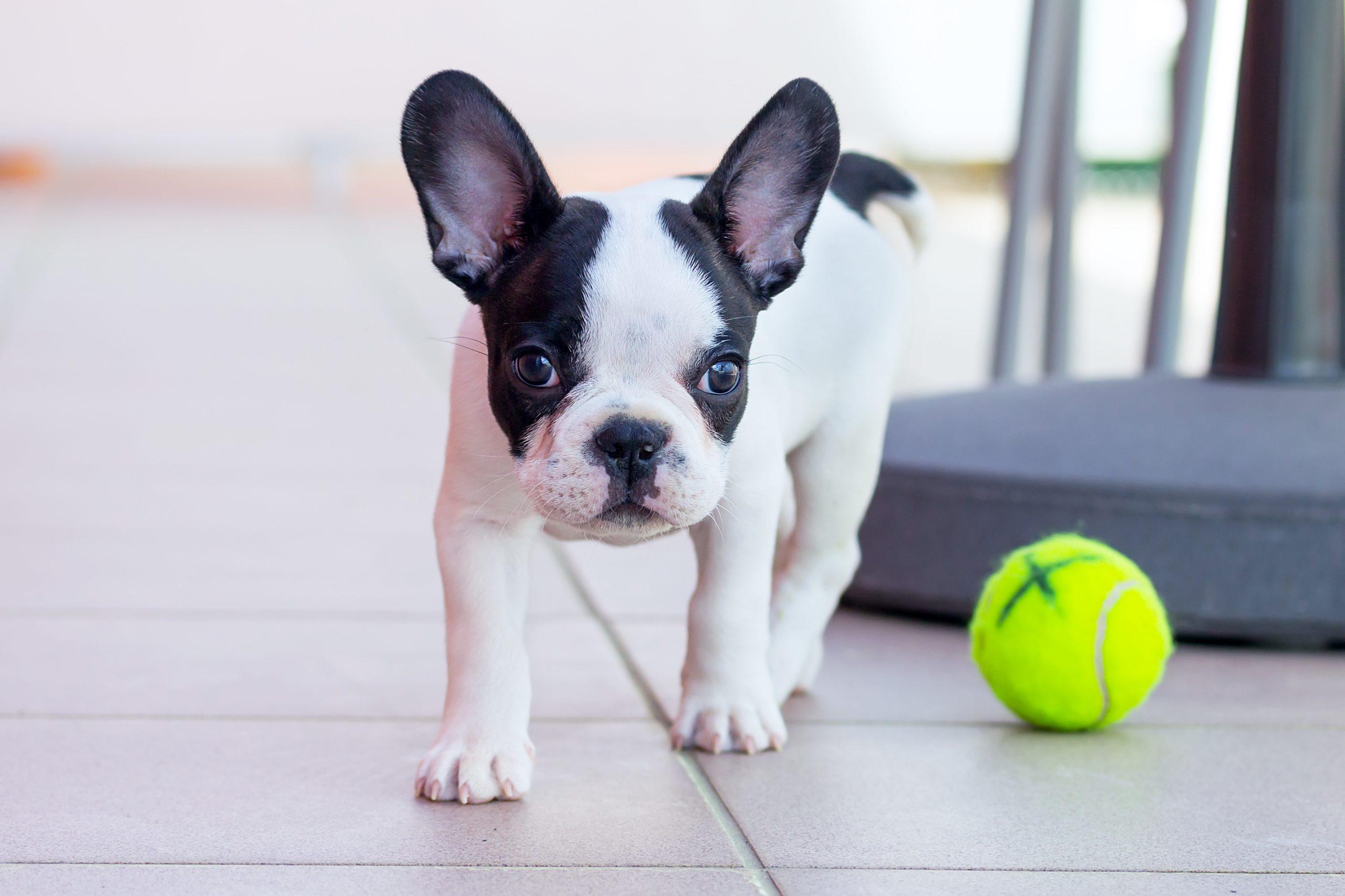 Polka Dot Dogs