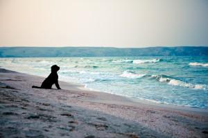 Black dog at the sea