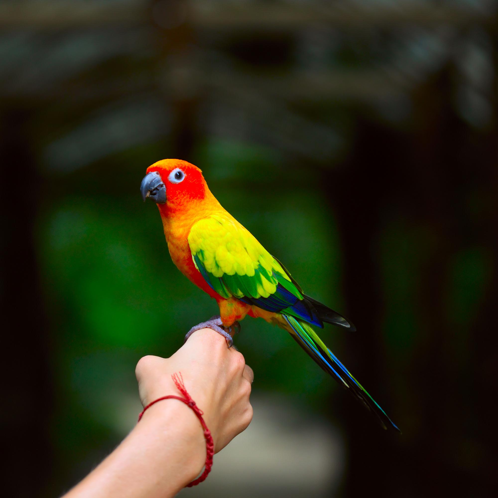 Adventures in Birds