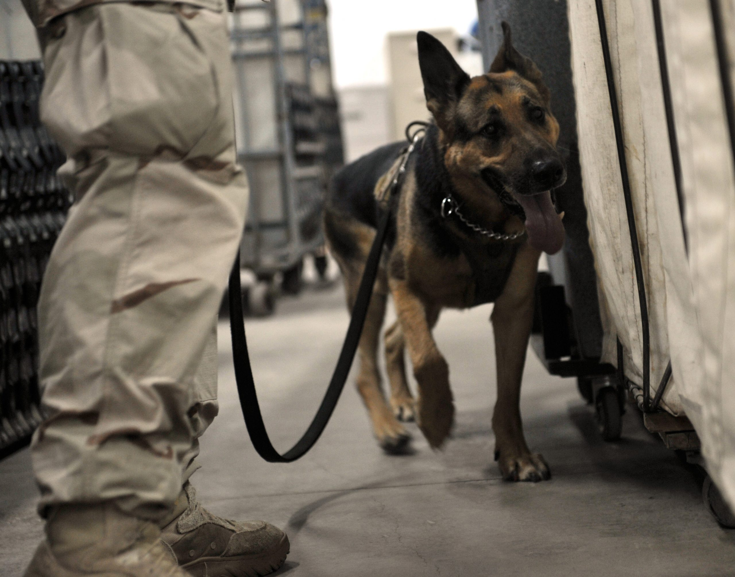 Operation: War Dogs