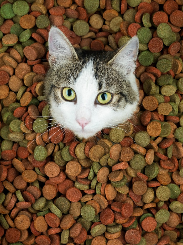 portrait of cute cat surrounded with dry food