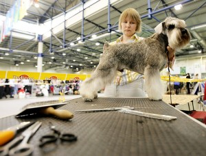 Dog exhibition