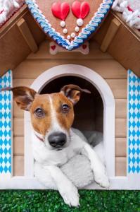 bavarian dog house