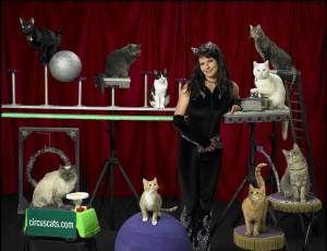 Acrocats Cat Circus