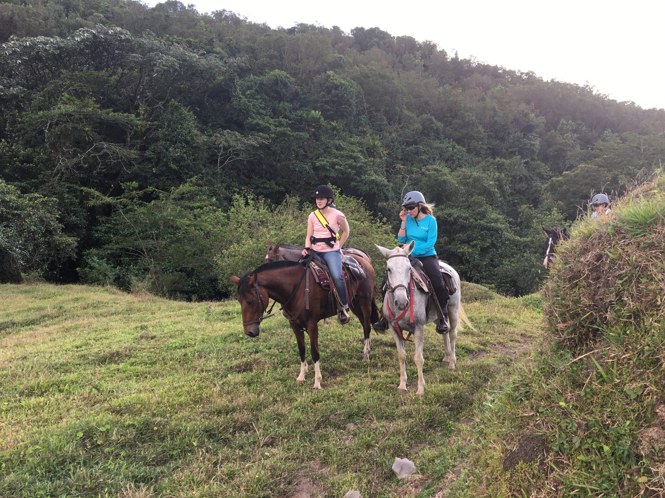 Final Day: Costa Rican Equine Adventure