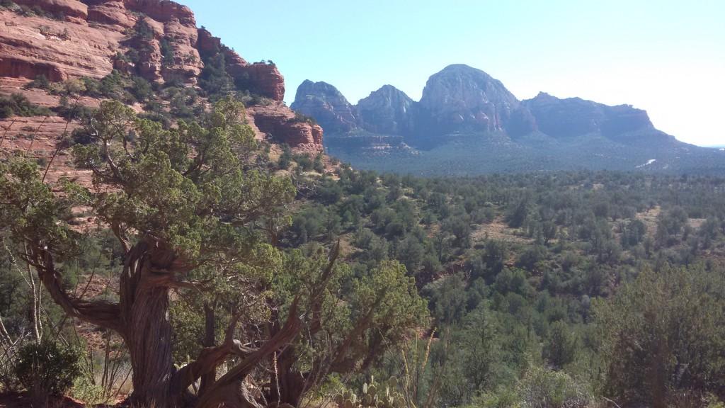 Looking back through Longs Canyon
