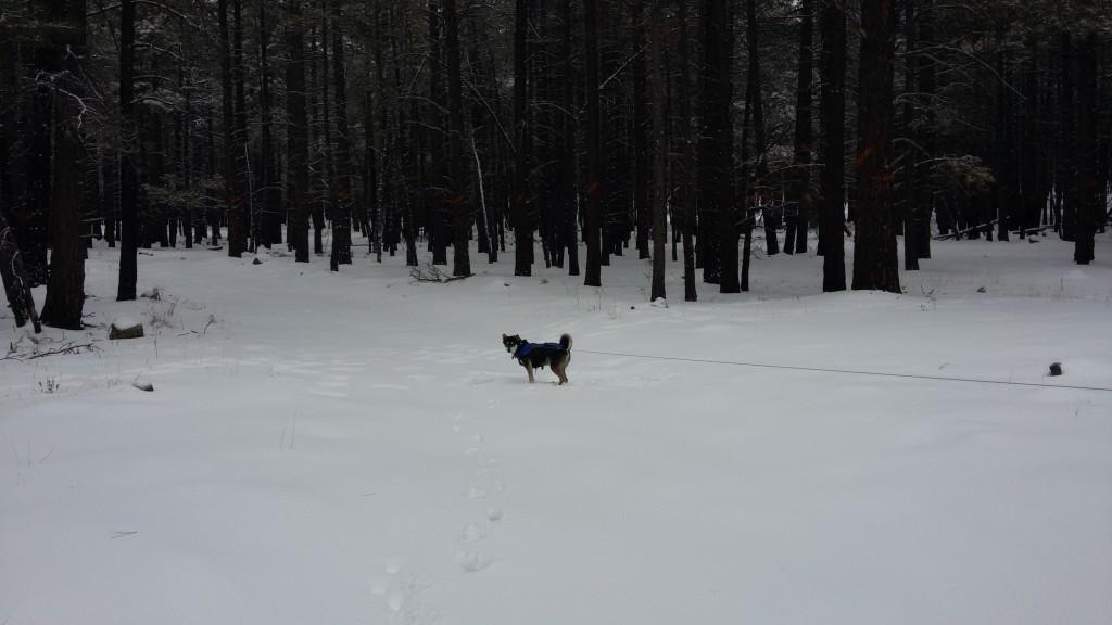 Kuma in winter wonderland