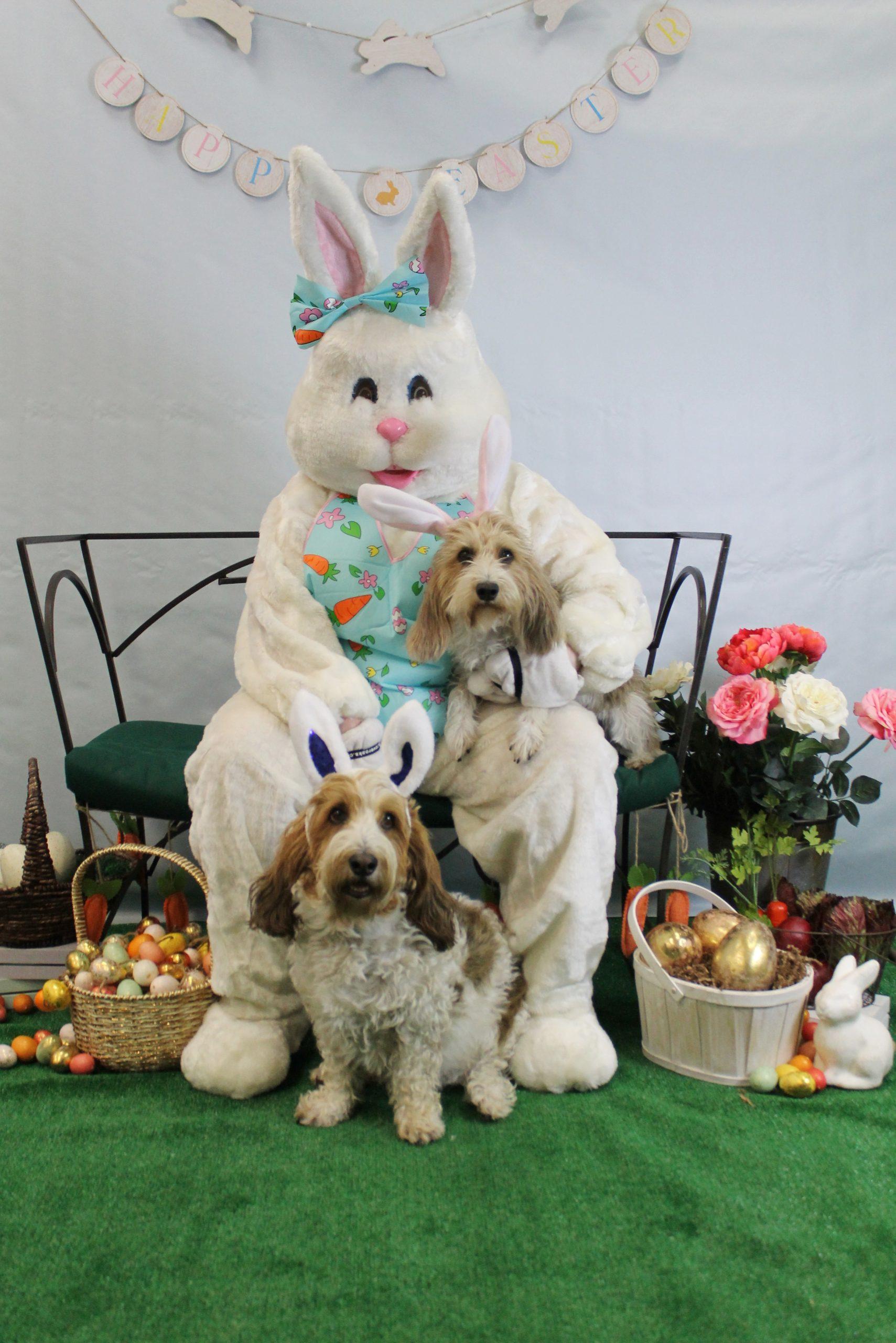 Easter Pet Pics