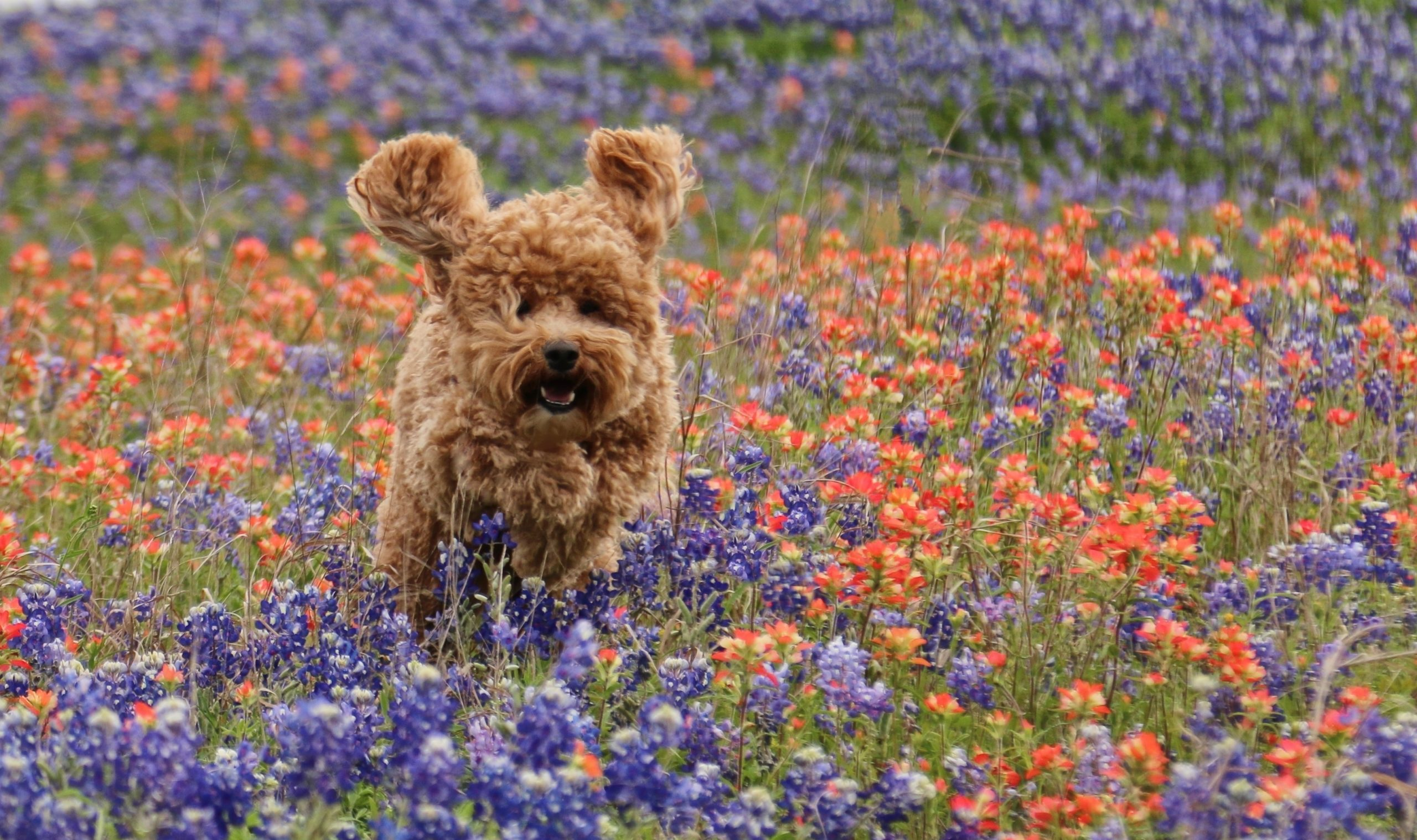 Pets in the Wildflowers