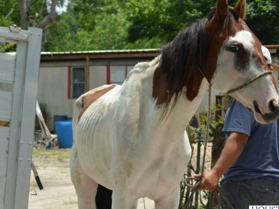 Donations: Neglected Horse