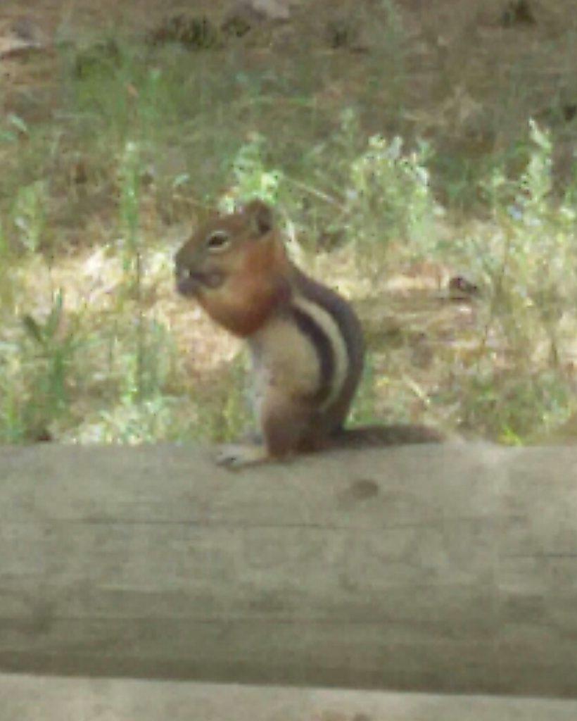 Mr. Chipmunk