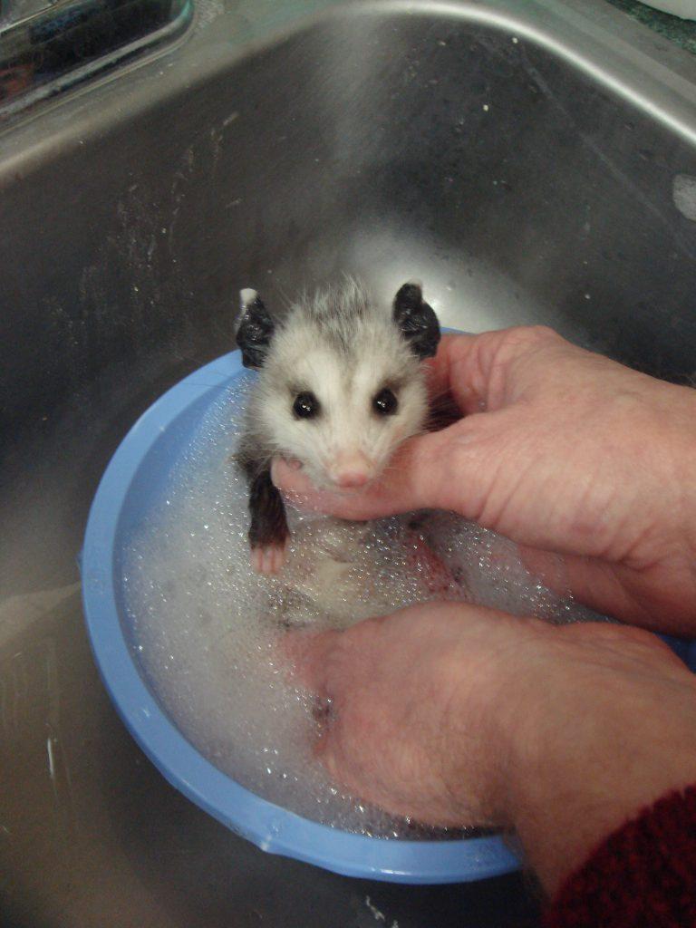 bath remove fleas