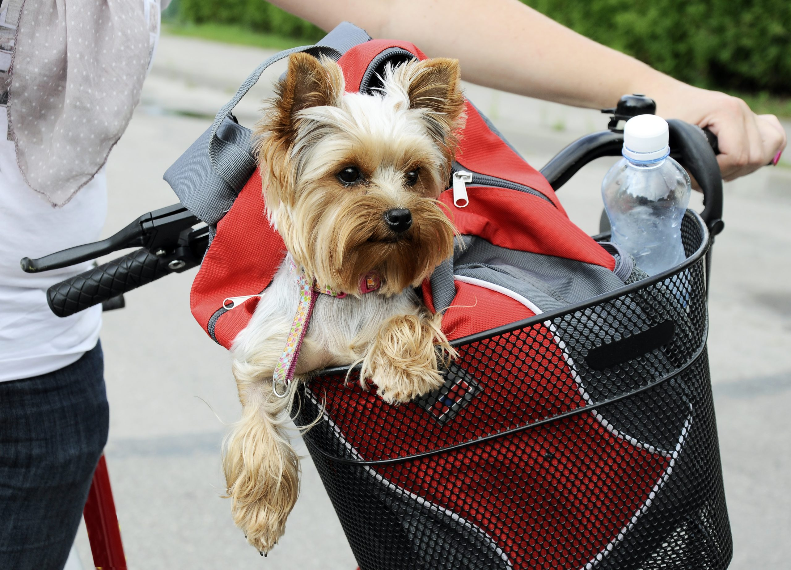 Join K9 Rescue Cycling