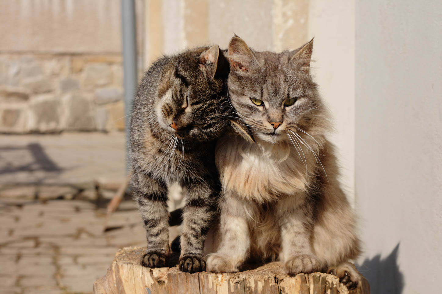 Cat-To-Cat Introduction