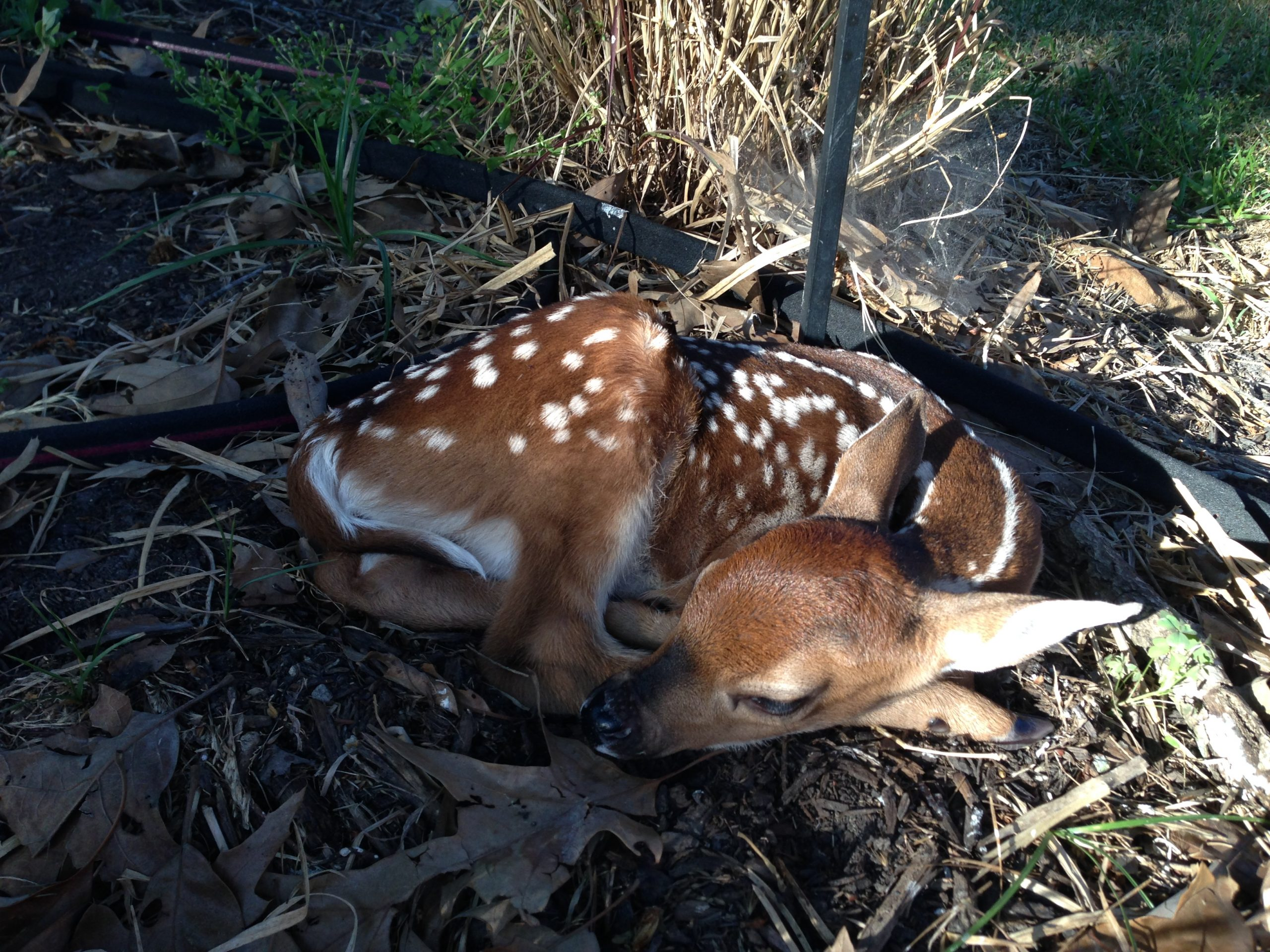 Wildlife Baby Boom