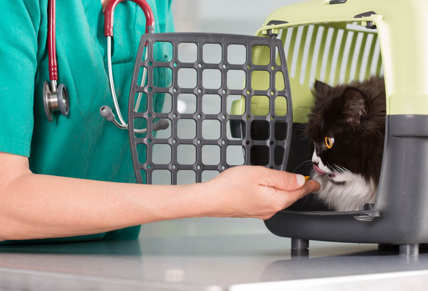 Cat Emergencies – 6 Signs of Trouble