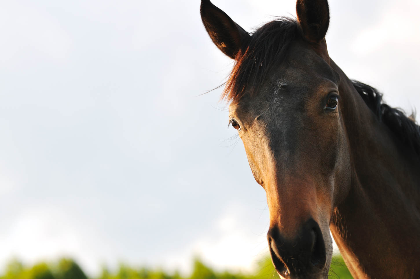 How Horses Can Help You Learn To Be A Better Listener