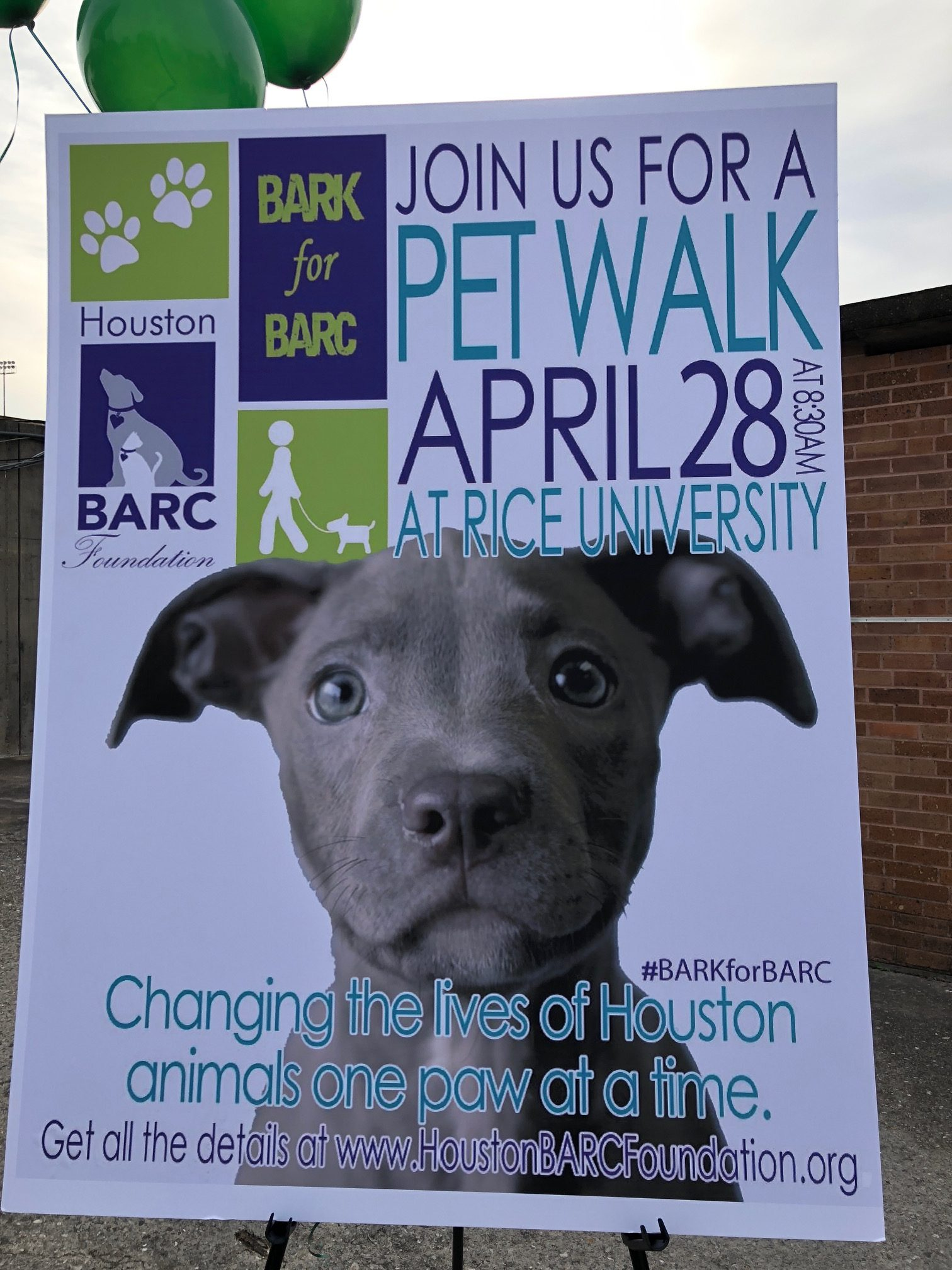 Houston's BARC Animal Shelter: Fundraising Photos