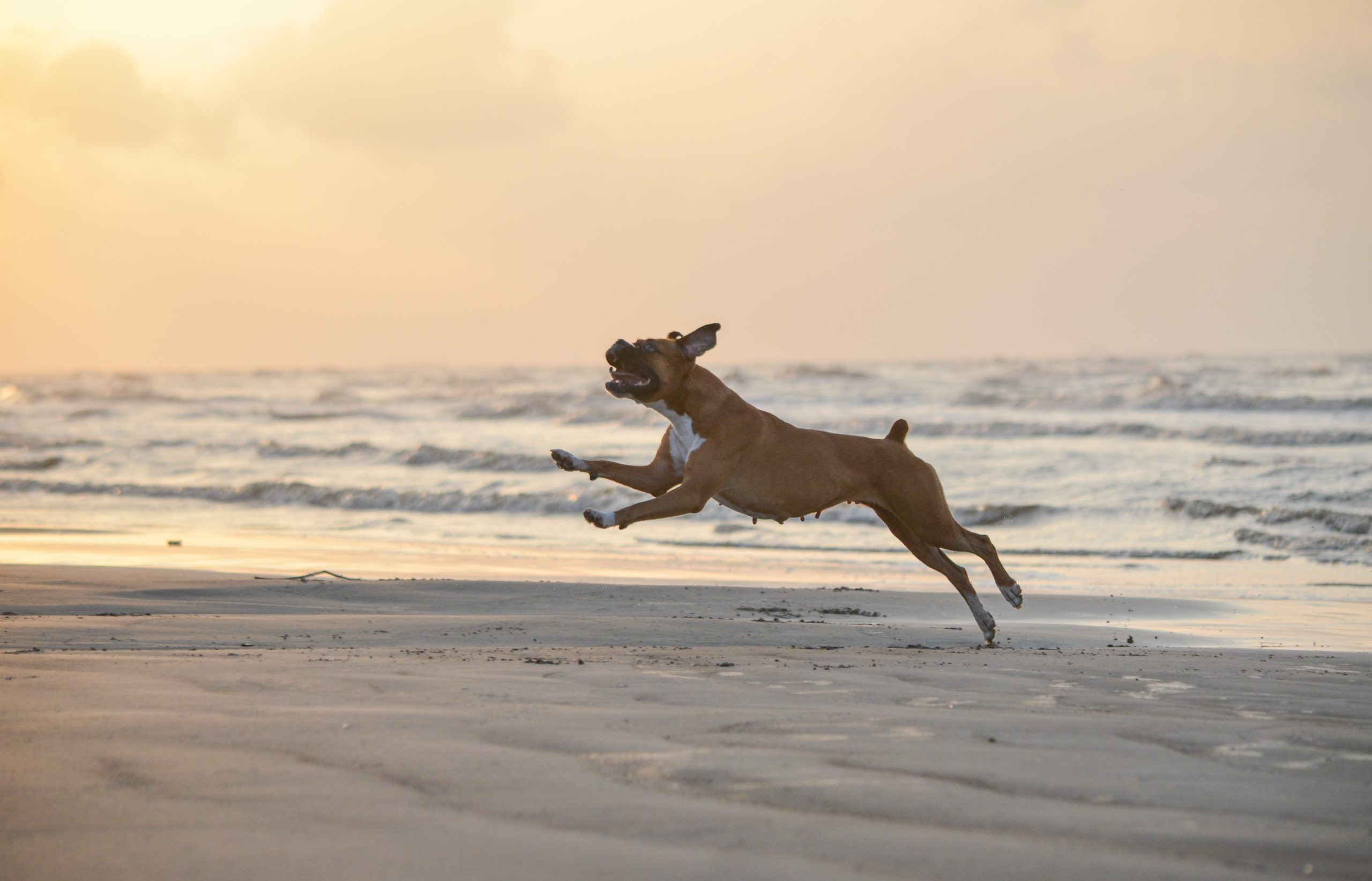 10 Things To Do With Your Pet In Galveston