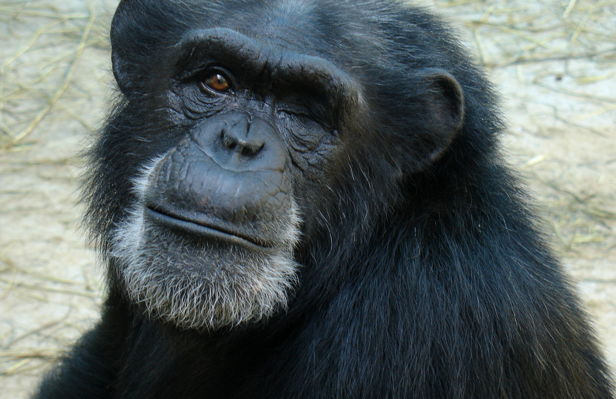 Chimp Haven In Shreveport Open To Public