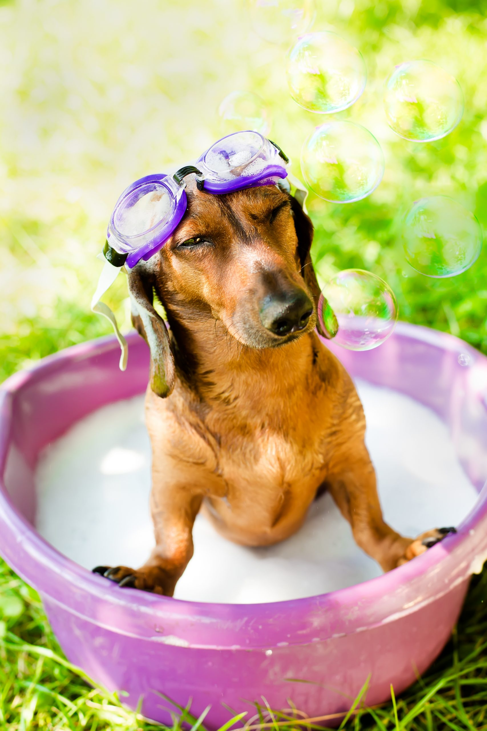 Grooming Tips for Summer Temperatures