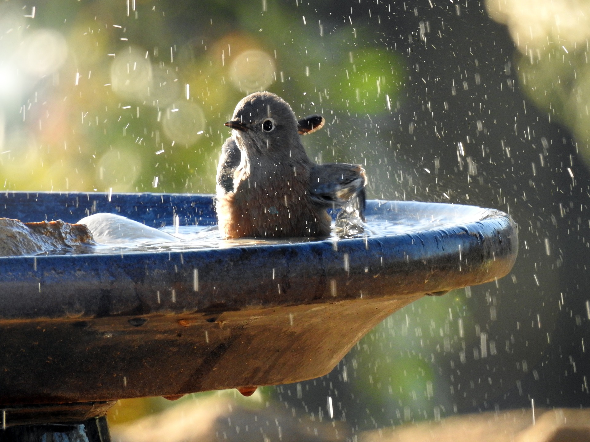 Bird Bath Bliss