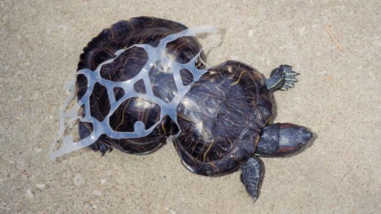 THE PLASTIC PLIGHT
