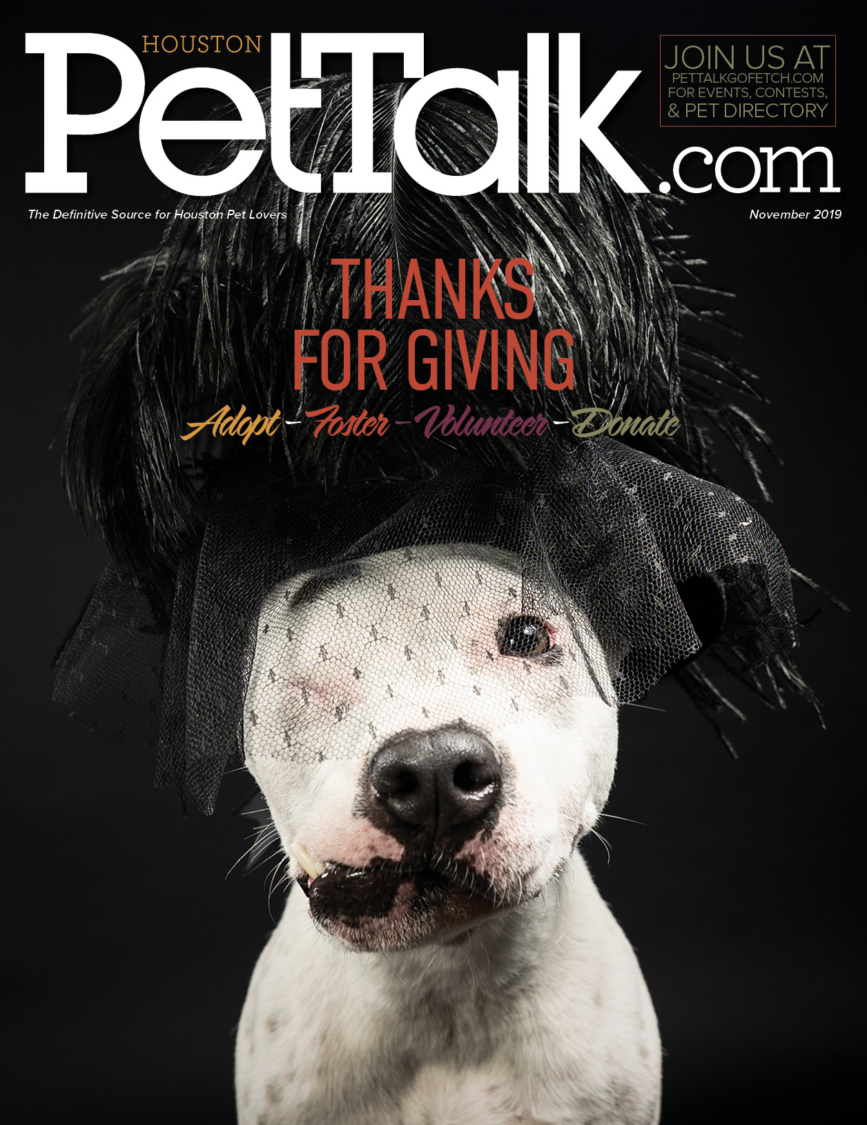 November 2019 Digital Issue of Houston PetTalk