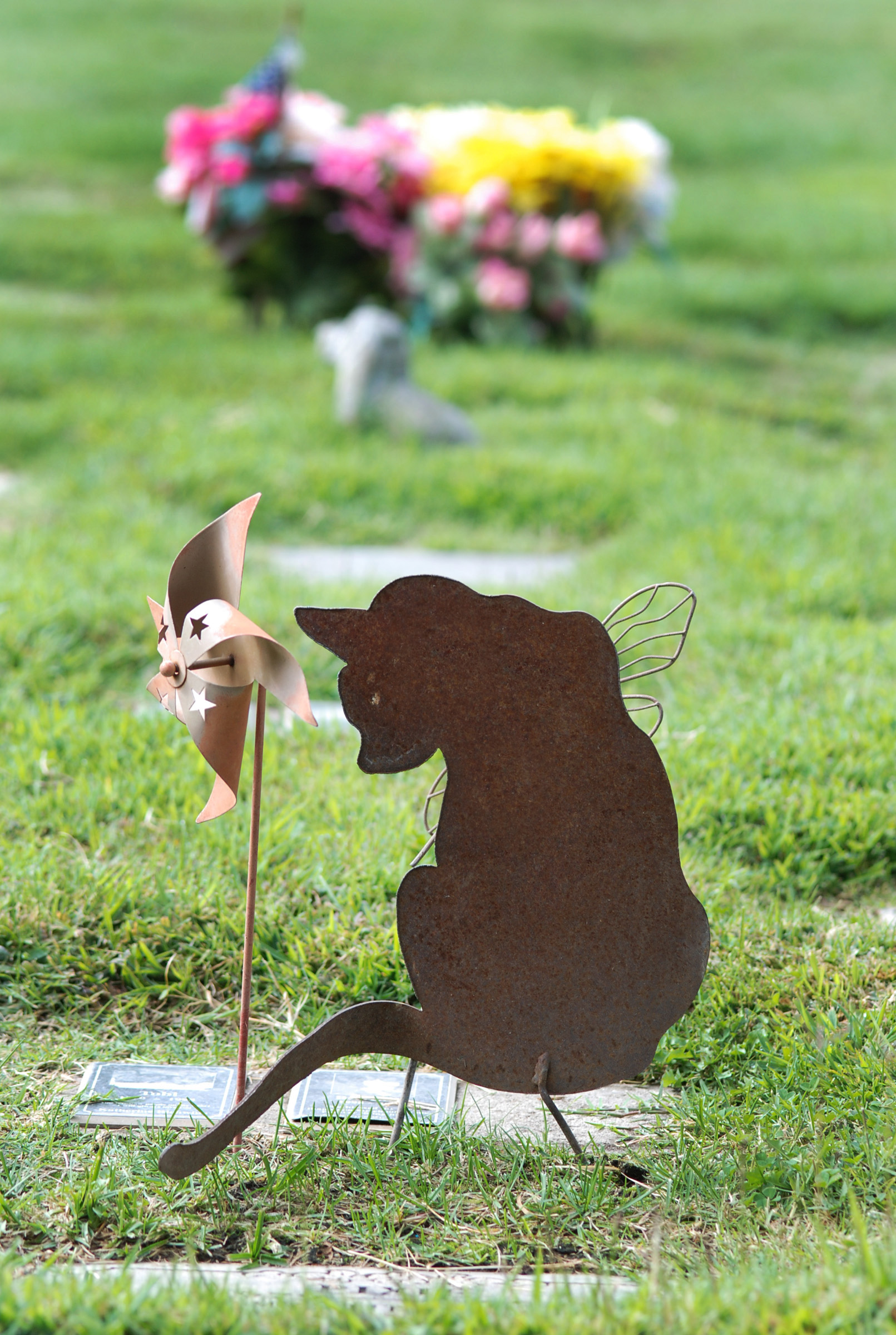 Pet Cremation, What Are Our Options?