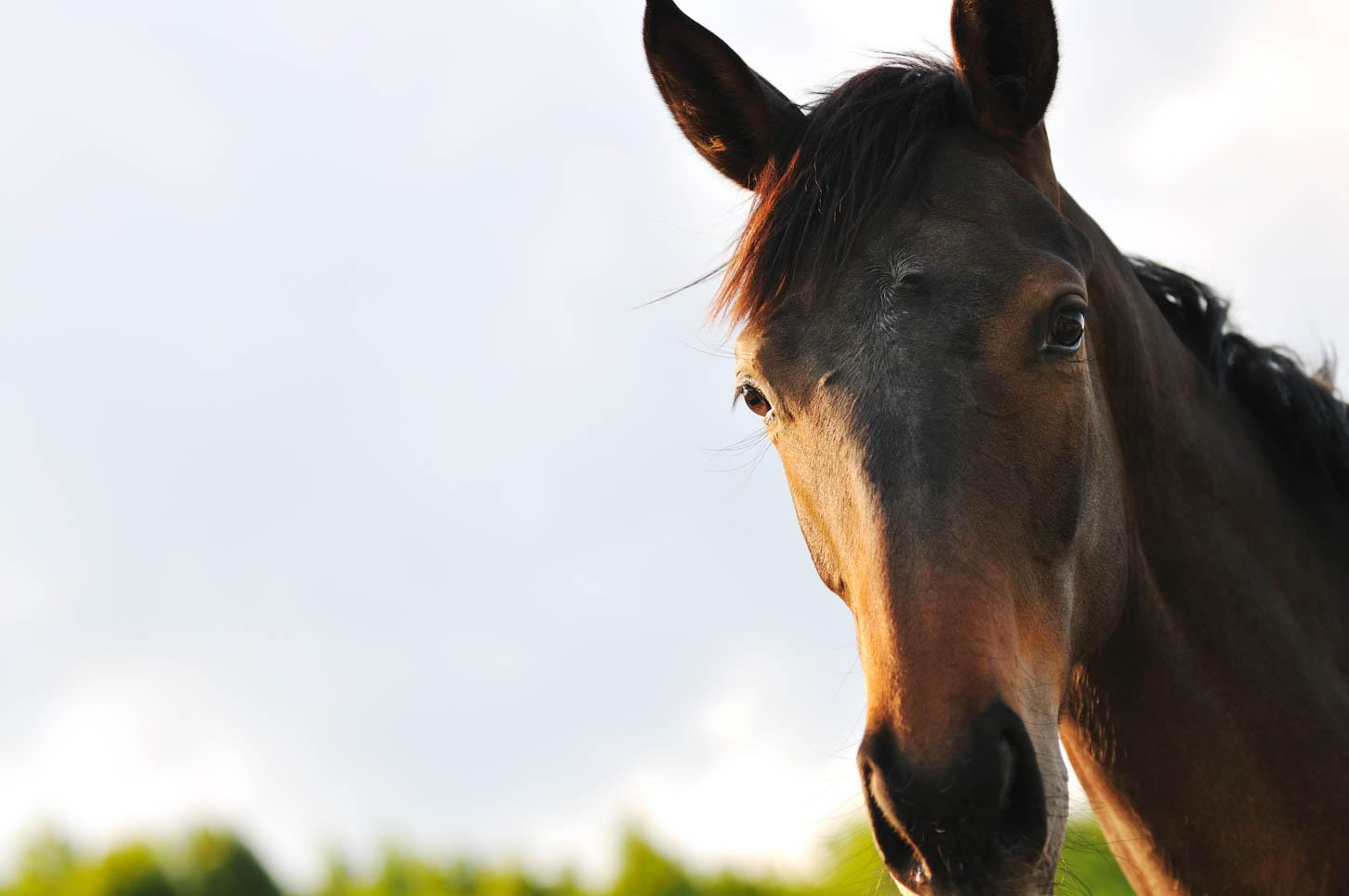 Racehorse Deaths: 12 Already This Year