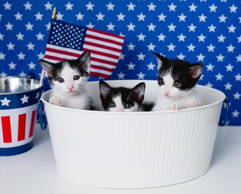 Paws Up For Patriotism Photo Contest