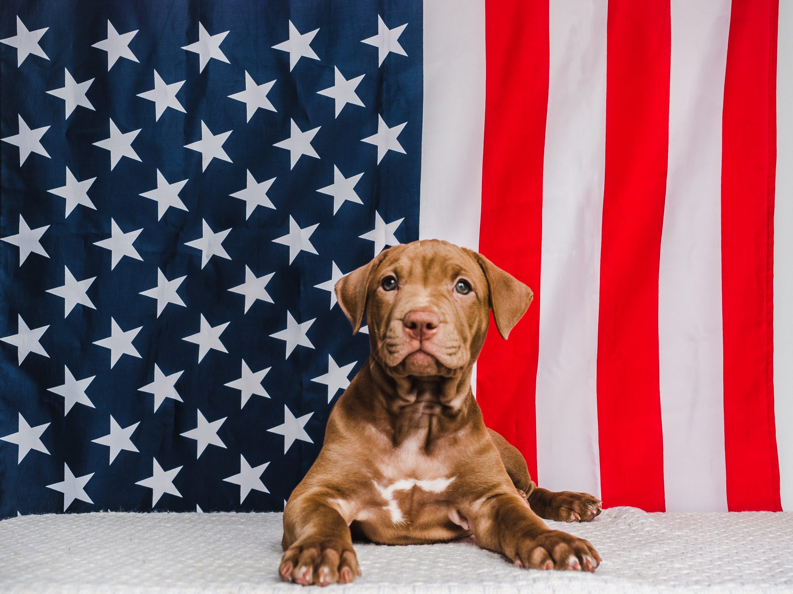 Paws Up For Patriotism Photo Contest Time