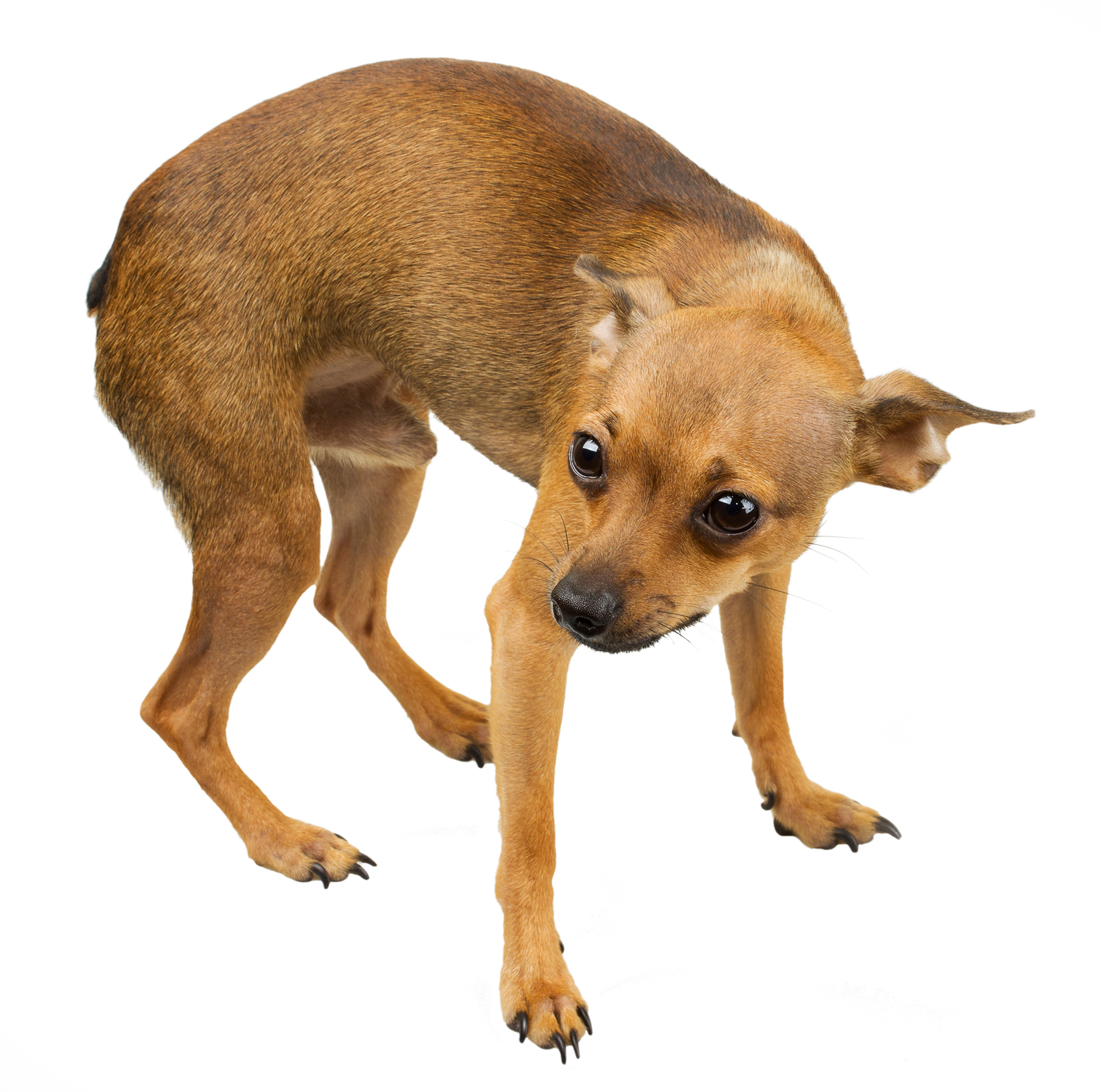 Dog Aggression VS. Fear: Which Is It? Learn To Read Canine Behavior