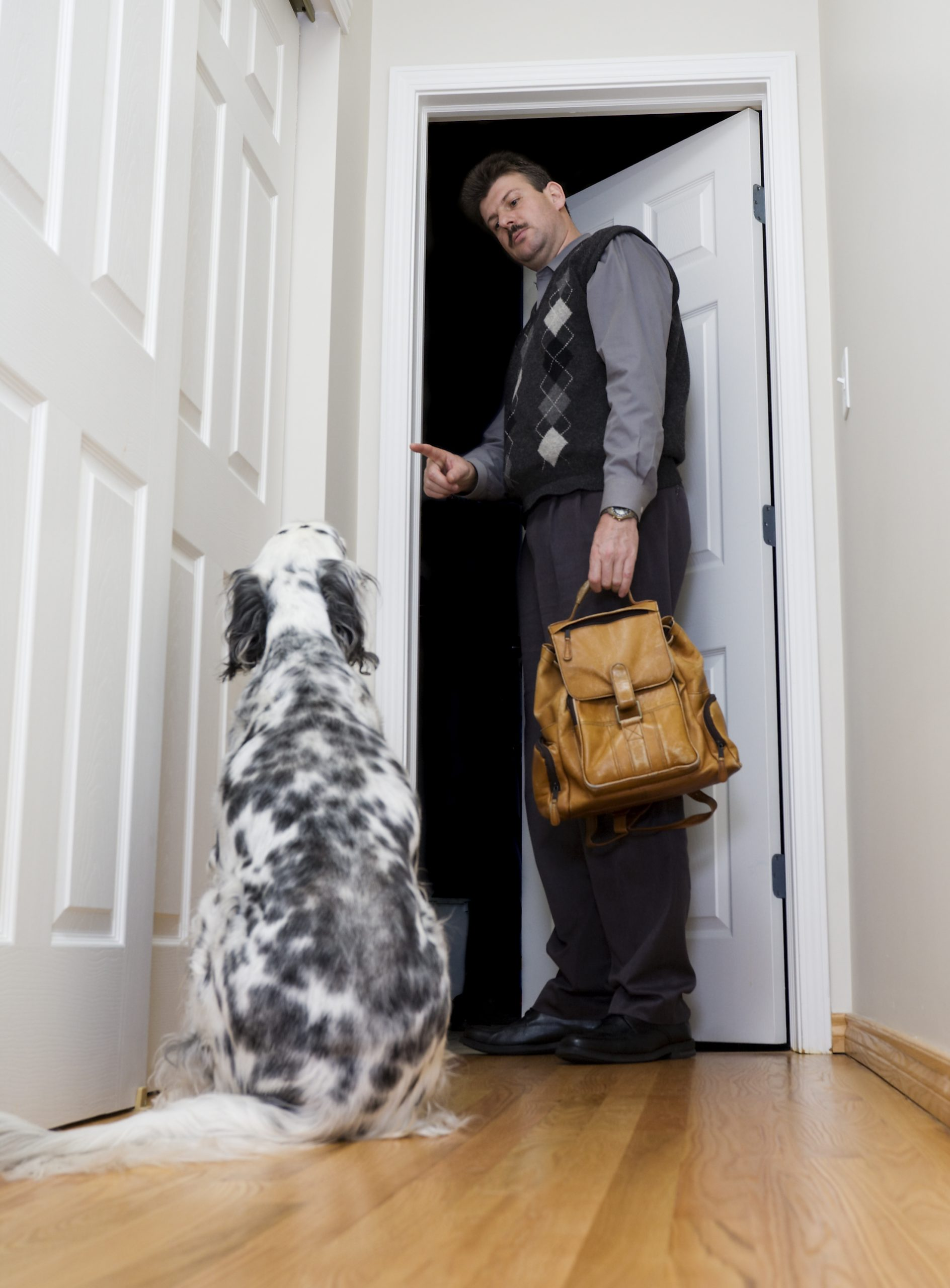 Helping Your Dog Cope When You Return To Work