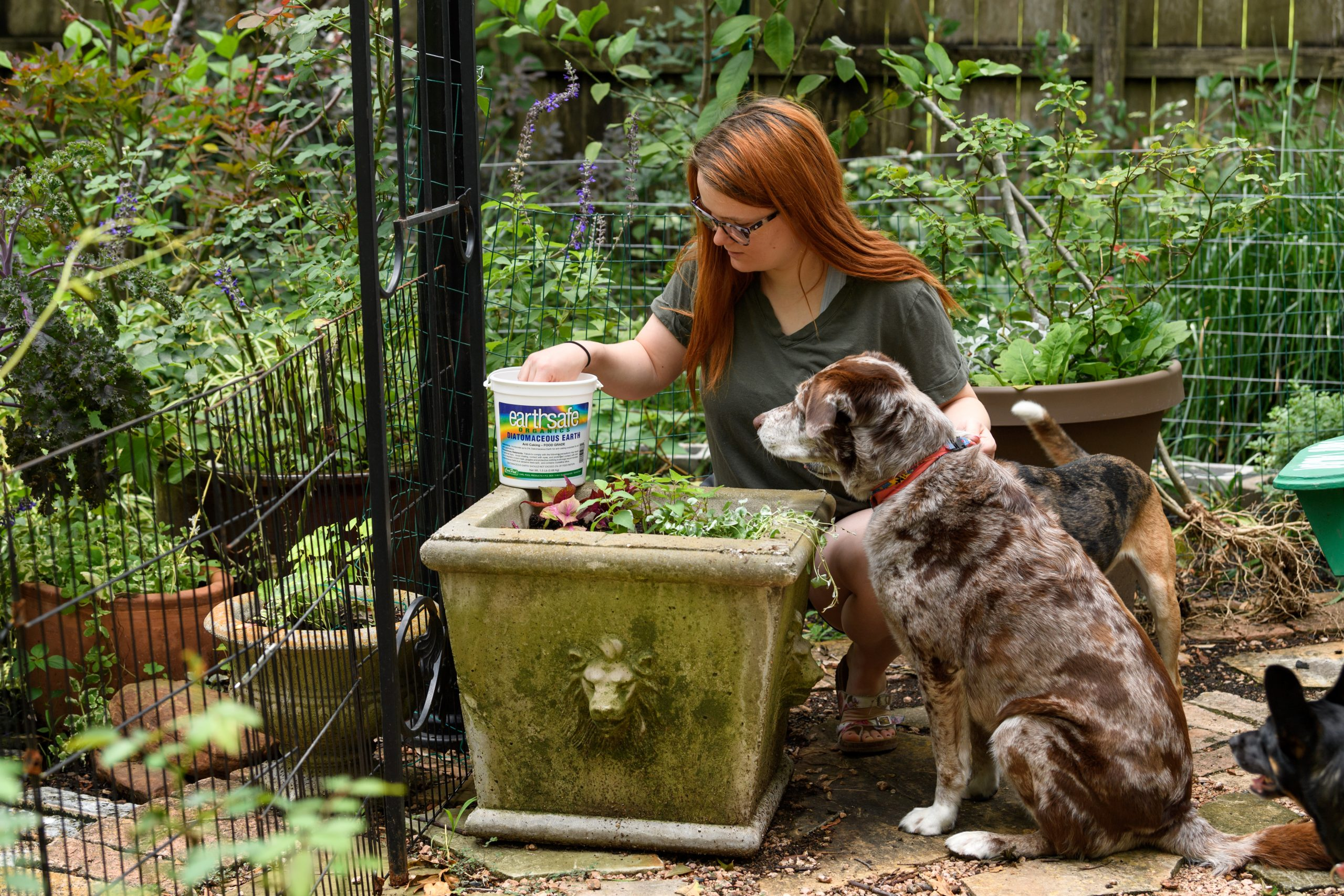 Gardening:  Top 3 Toxicities In Dogs & Cats
